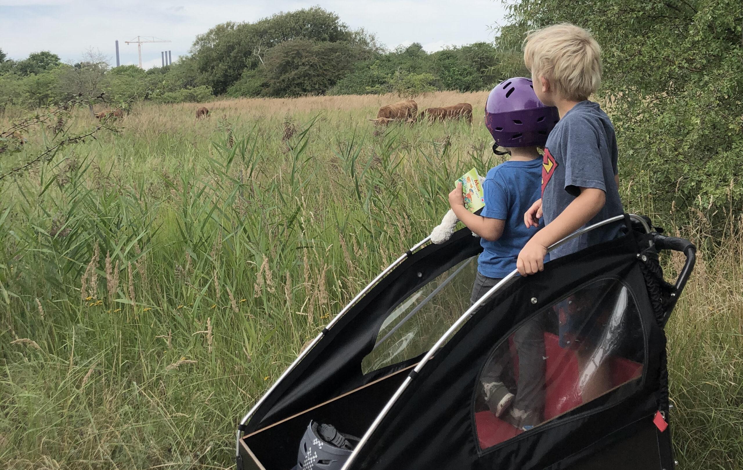 amagerfælled - på tur med børn i København